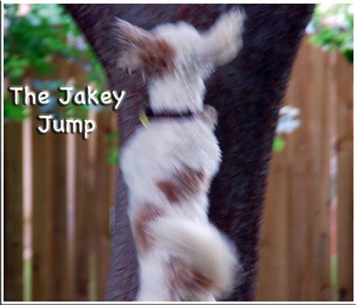 The-Jakey-Jump