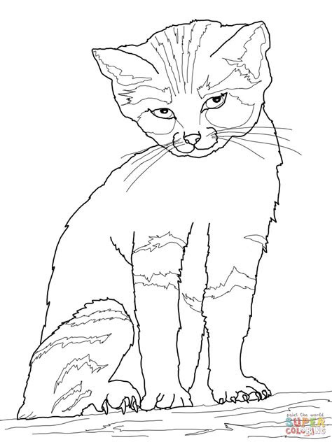 sand cat coloring page  printable coloring pages
