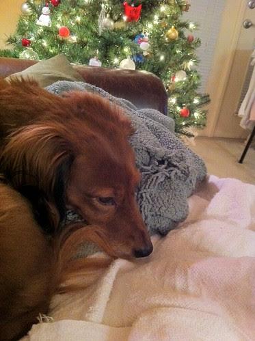 Lulu at Christmas