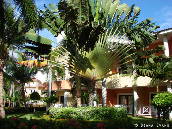 Punta Cana Dominican Republic 2011 032