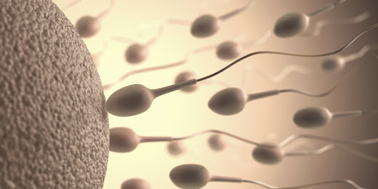 Everything You Need To Know About Sperm