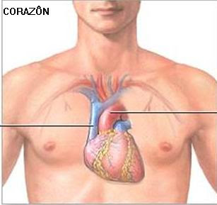 corazon1 Los 5 órganos y su función psicológica