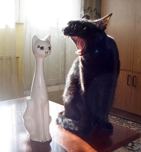 funny_cats_53 (599x644, 123Kb)