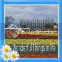 Wonderful Things In Life
