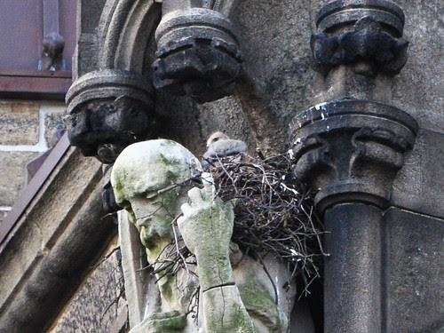 Shy Cathedral Nestling