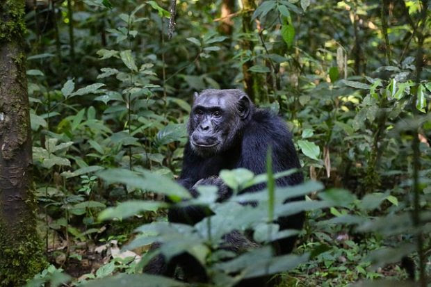 4 Great Reasons for You to go on a Gorilla Trek at least once in Your Lifetime
