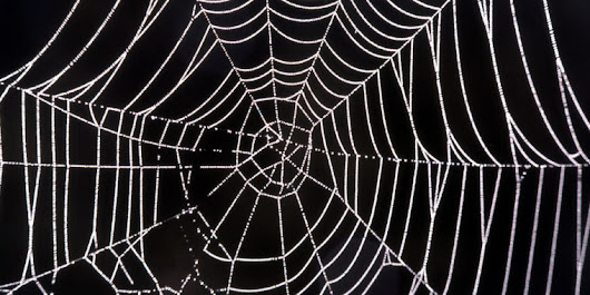 Researchers use lasers to weld spider silk to kevlar | Ars Technica