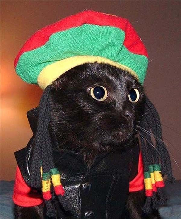Bob Marley 28 Hilarious Cats in Halloween Costumes
