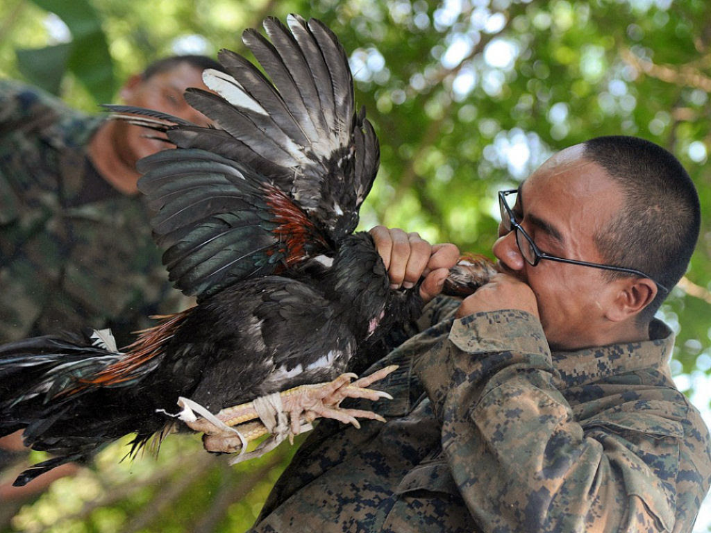Cobra Gold 2013 - Militares sobrevivem com sangue de cobra na selva tailandesa 11