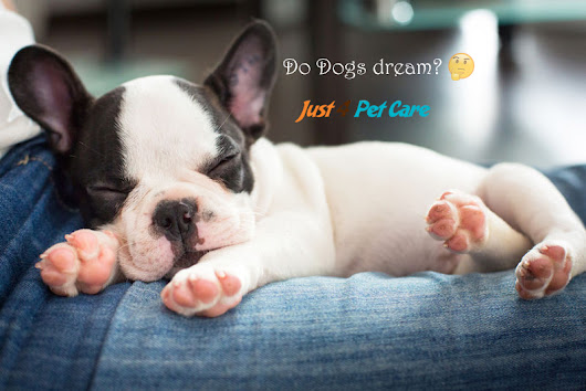 Do Dogs Dream? What Do They Dream About? - Just 4 Pet Care