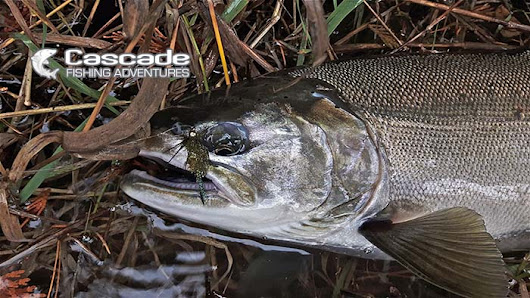 October Fishing on the Fraser River - Cascade Fishing Adventures