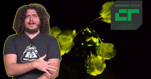 Crunch Report | Glow-in-the-Dark Plants | TechCrunch