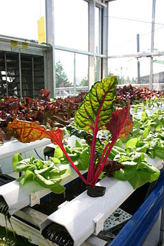 Aquaponics with Vibrantly Colored Plants
