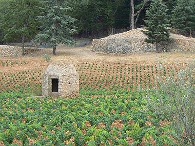 borie au milieu des vignes.jpg
