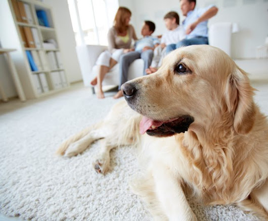 3 Tips for Pet Owners When Purchasing a Home