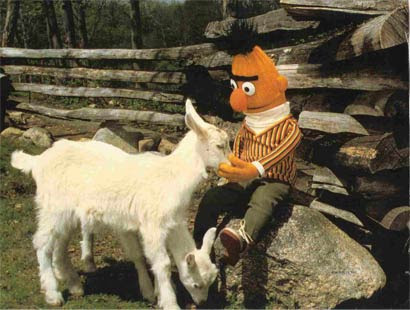 Bert with a goat.