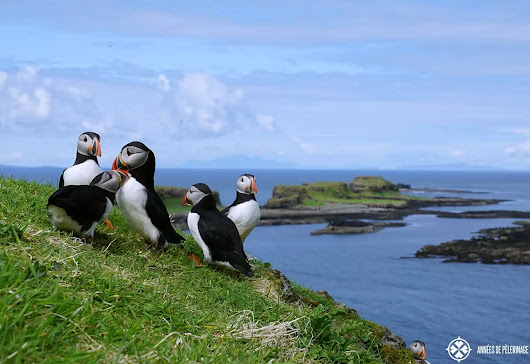 Visiting the Puffin Colony on Lunga, Scotland