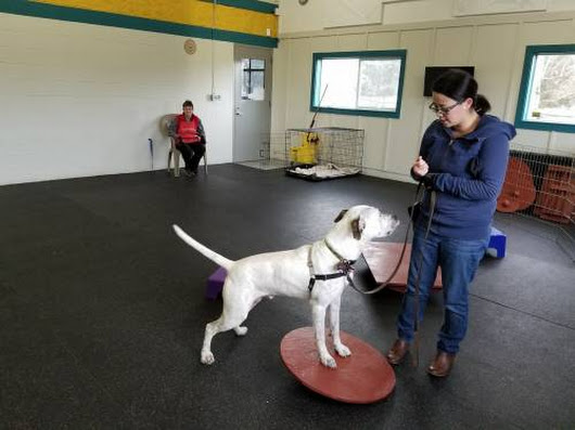 From the Behavior and Training Team: Gus Goes to School - Willamette Humane Society