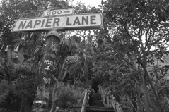 Coit Tower - Napier Lane