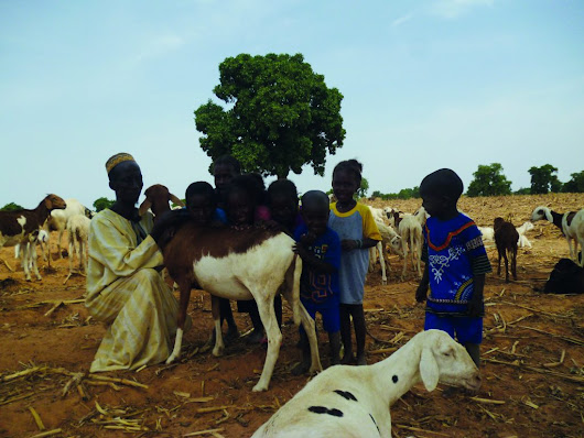 Fulani freed from the threat of PPR and SGP in Mali - GALVmed
