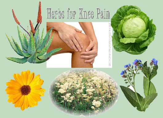 HERBS FOR KNEE PAIN - TACKLE WINTER JOINT PAIN