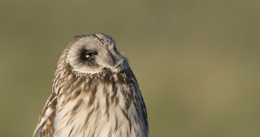 One Year Since the Rescue of Galileo the Short-eared Owl