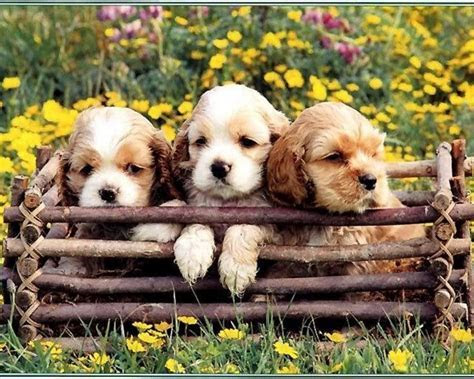 Puppies in Flowers Computer Wallpaper   WallpaperSafari