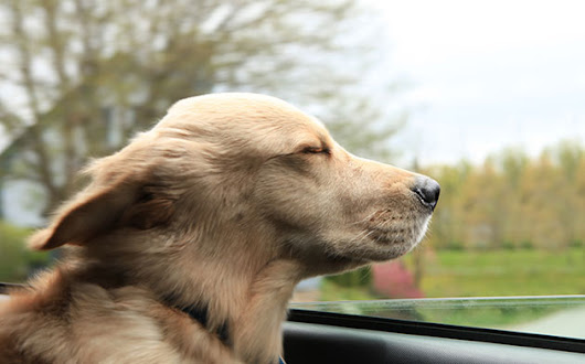 10 Must-Haves for Driving with Your Dog | DMV.ORG