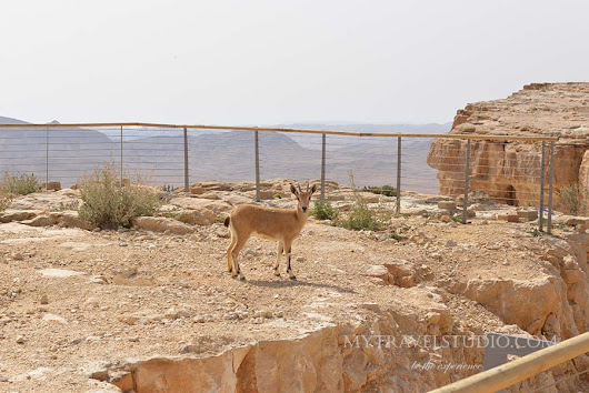 Negev – Mitzpe Ramon rated on a top ten world destinations