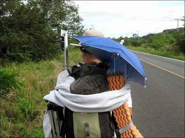 Backpacking Kitty!!! (20 pics)
