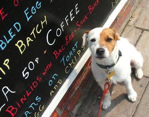 Dog Writes on Blackboard