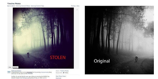 Stolen Picture Wins Photography Contest, Then Gets Disqualified