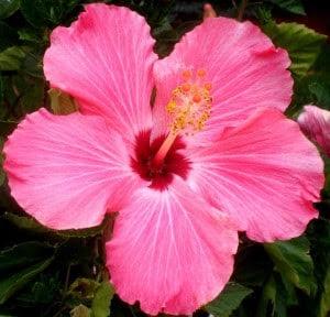 10 Tipos De Flores Imagenes Imagenes En Taringa