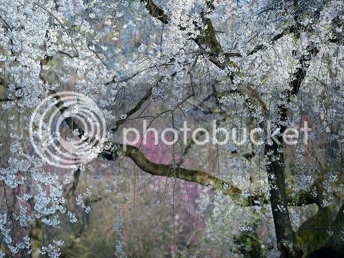 http://i1379.photobucket.com/albums/ah128/zvd4/0e755a9c-7425-431f-8874-20fa62a452ae_zpsor4b4xcw.jpg