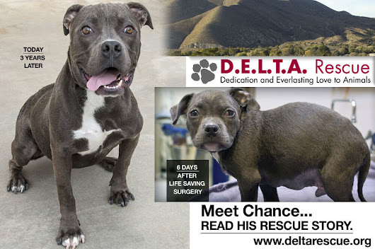 A Second Chance To Be Loved - DELTA Rescue Care for Life Animal Sanctuary