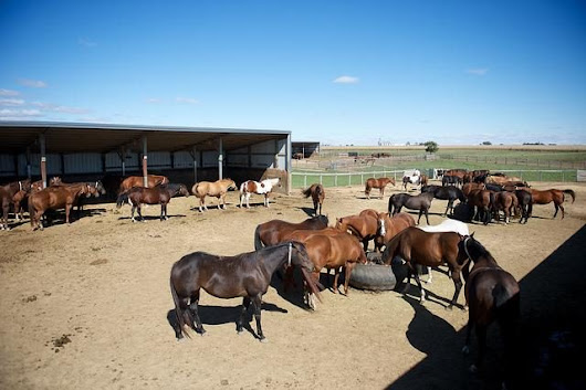 BREAKING: House Appropriations Committee Lifts Ban on Horse Slaughter | HORSE NATION