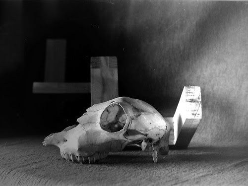 Sheep Skull by 35mm_photographs