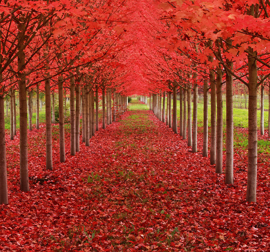 amazing-trees-4