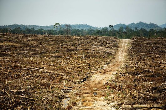 Major Companies Using Palm Oil Commit to Addressing Worst Industry Abuses. But is It Enough?