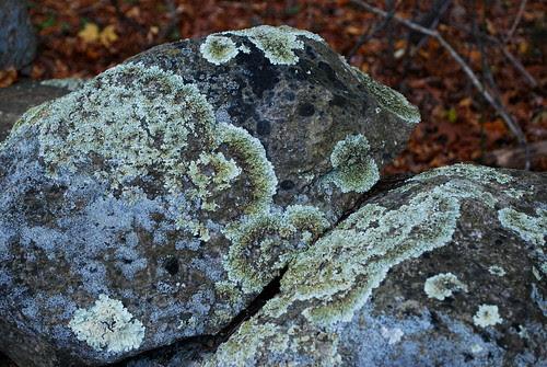 Nov 09 mossy rocks