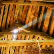 Mold in Attic – FAQ - Mold testing, prevention and removal tips