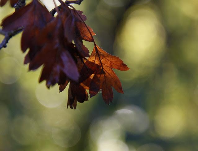 sunny oak2