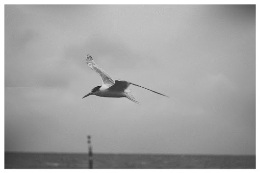 Sometimes it's better to fly solo... #emotions #blackandwhite #photography #sadness #bird