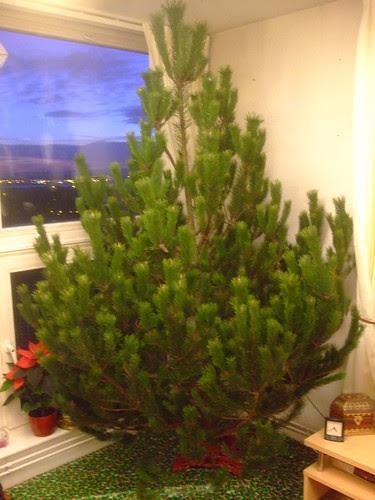 Tree Up!