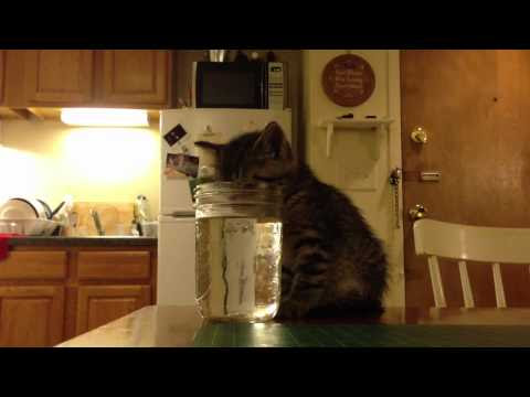 Kitten falls asleep while drinking from a jar of water, gets very rude awakening.