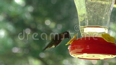 Stock Footage: Humming Bird Feeder