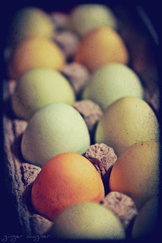 Organic, cage free, locally grown eggs