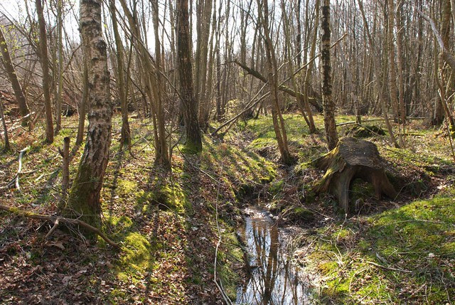 DSC_6096 Woodland stream in Spring