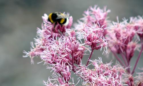 flor con insecto
