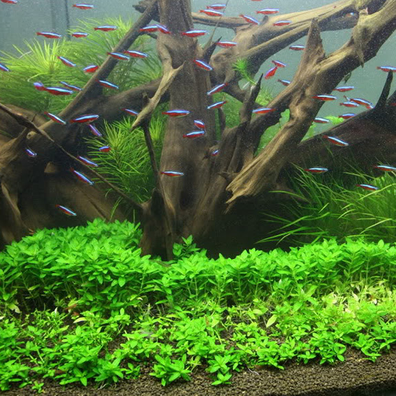 Unduh 530+ Background For Aquarium Plants Gratis
